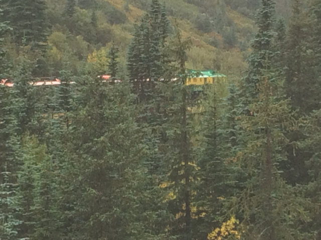 White Pass and Yukon Route train in the forest