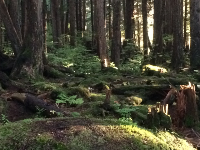 Walking through the forest at Icy Strait Point, Alaska